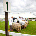 Lincoln Longwool @ Lincolnshire 2014