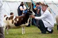 Royal County of Berkshire Show 2014