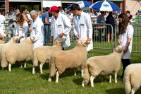 Royal Welsh Show 2014