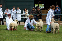 Nottinghamshire County Show 2015