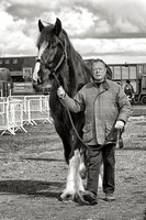 National Shire Horse Society Spring Show 2014