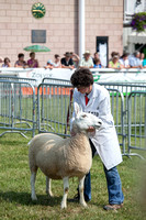 Royal Welsh Show 2013 Filename: Cadd_130722_5195
