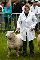 Great Yorkshire Show 2012