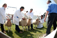 Royal Cornwall Show Filename: Cadd_130606_2984