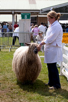 Great Yorkshire Show 2013