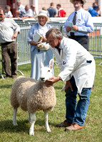 Royal Welsh Show 2013 Filename: Cadd_130722_5184