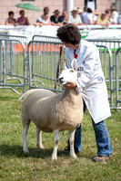 Royal Welsh Show 2013 Filename: Cadd_130722_5194