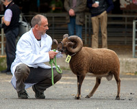 11th National Show & Sale of Traditional & Native Breeds