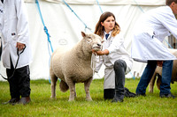 Royal County of Berkshire Show 2013