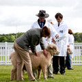 2012 Staffordshire County Show