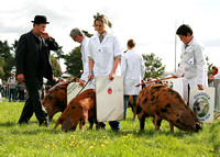 Royal County of Berkshire Show 2010