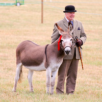 Oxfordshire County & Thame Show 2010