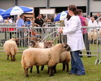Royal Welsh Show 2010