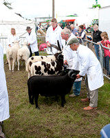 2012 Three Counties Show