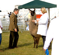 Royal County of Berkshire Show 2009