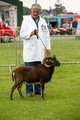 Soay @ Three Counties (Day 3)